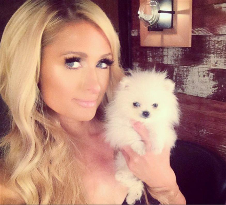 Las 8 Rarezas De Paris Hilton Con Las Mascotas
