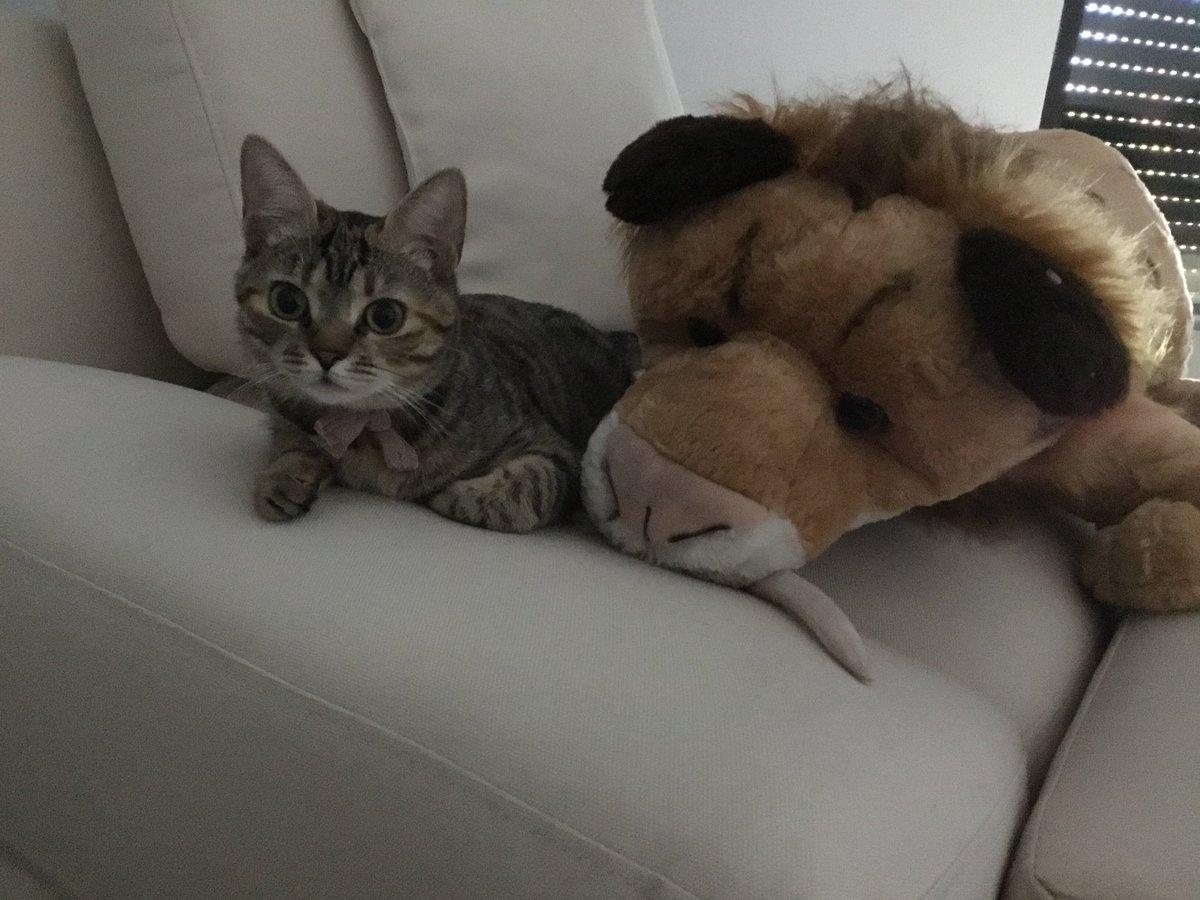 La misteriosa historia de la gata de Iker Jiménez