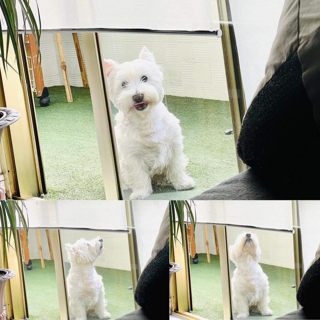 victor sandoval perro